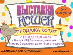 """Выставка кошек """"Летний Альянс-2016"""" в КВЦ """"Сокольники"""""""