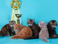 """Выставка-продажа котят """"КоШарики Шоу"""" в КВЦ """"Сокольники"""""""