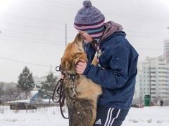 """Выставка собак из приютов """"Собака Согревака"""" впарке """"Садовники"""""""