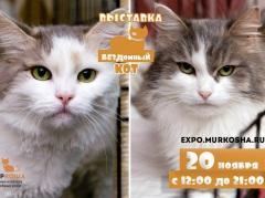 """Выставка кошек с непростой судьбой """"Бездомный кот"""""""