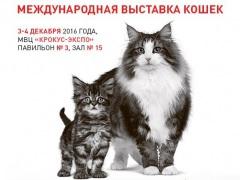 """3-4 декабря 2016 Международная выставка кошек в МВЦ """"Крокус Экспо"""""""