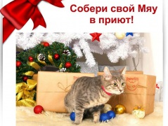 """Рождественская ярмарка """"Каждой кошке добра ладошку!"""""""