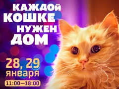 """Выставка-пристройство кошек """"Каждой кошке нужен дом"""""""
