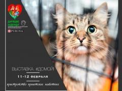 """Выставка приютских животных - """"Домой!"""""""