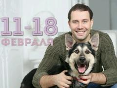 """Акция """"Вагончик добра""""по сбору кормов для бездомных собак и кошек"""