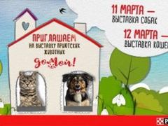 """Выставкаприютских животных """"Домой"""" (собаки и кошки)"""