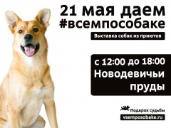 """Выставка приютских животных """"Всем по собаке"""""""