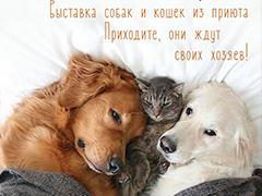 """Выставка собак и кошек """"У любви нет породы"""" в парке """"Кузьминки"""""""