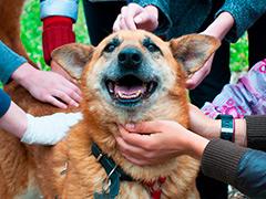 """Выставка животных из приюта """"Собаки, которые любят"""" в парке """"Садовники"""""""