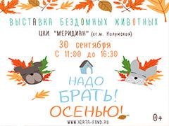 """Выставка бездомных собак и кошек """" Надо Брать! ОСЕНЬЮ!"""""""