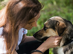 """Выставка животных """"Собаки, которые любят"""" в парке """"Садовники"""""""