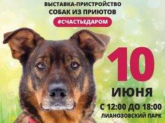 """Выставка-пристройство собак из приютов """"Счастье даром"""""""