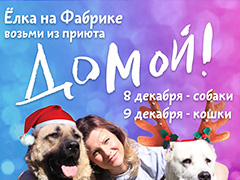 Первая Новогодняя Ёлка, которая состоится в Москве, будет для собак и кошек из приютов