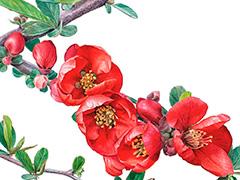 """Выставка ботанической живописи """"Цвет Японии"""""""