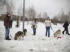 """Как прошла выставка собак из приютов """"Собака Согревака"""" в парке """"Садовники"""""""