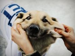 """""""В гостях у Барбоса"""": занятия с собаками-терапевтами"""