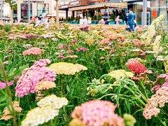 """Сто тысяч цветов высадят к фестивалю """"Московское лето. Цветочный джем"""""""