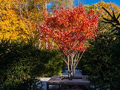 В Ландшафтном парке ВДНХ высадили более 60 000 многолетних цветов, 7000 деревьев икустарников