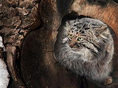 Московский зоопарк приглашает отметить день кошек