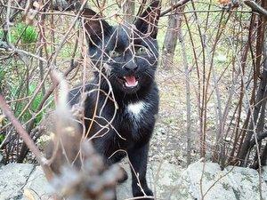 """Коты """"Аптекарского огорода"""" - потомки царских котов времён Петра I"""