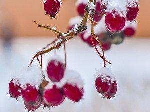 Небольшой снег и гололедица сохранятся в Москве в начале недели