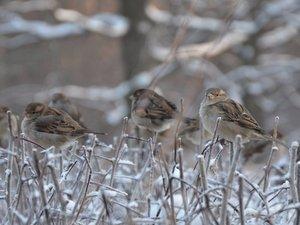 зимовка птиц Москва
